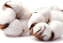 tipos de algodón