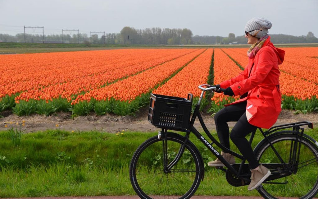 bicicleta-camino-flores-holanda